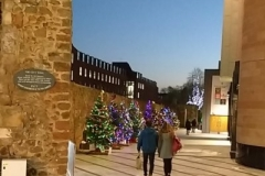 Christmas Trees on Roman Walk